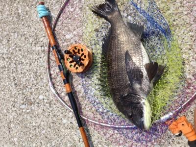 へち釣り 40cm – グラビス 村松正規