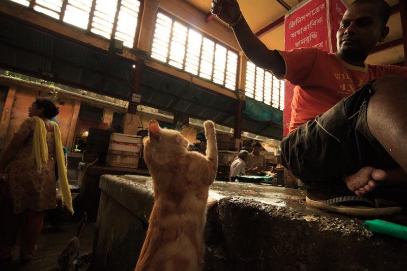 アジアの旅10日目。インド・コルカタ到着 – 写真家 竹沢うるま
