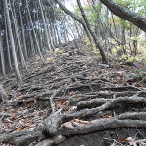 観光地の山を登る(1)【鳴虫山】-  …Research General Store 高橋謙吾