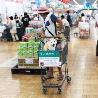 柴犬ラニと海のストーリー#06|ホームセンターでお買い物