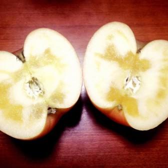 暖冬のリンゴを見ながら思う「アウトドア」が持つ可能性