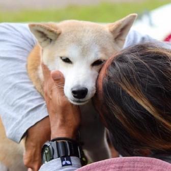 柴犬ラニと海のストーリー#07|犬の日常ケア