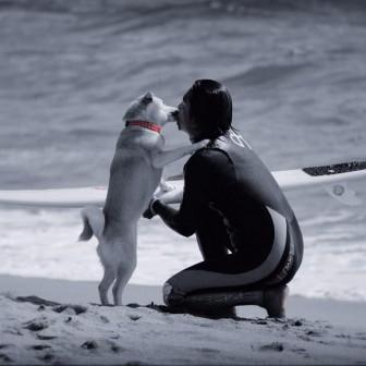 柴犬ラニと海のストーリー#08|歓迎の儀式をいつまでも